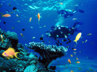 Diving in Coron Bay is fantastic