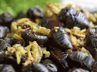 June Bug, Nueva Ecija